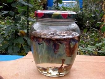Перегородки грецкого ореха при конъюктивитах