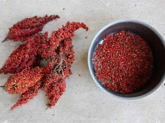 Плоды сумаха для пищеваренья