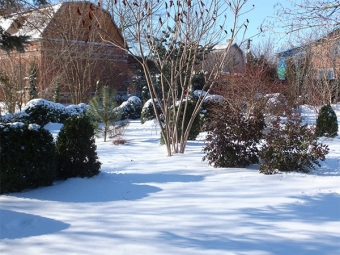 Сумах зимой