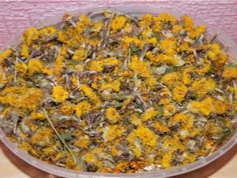Сухие цветы мать-и-мачехи