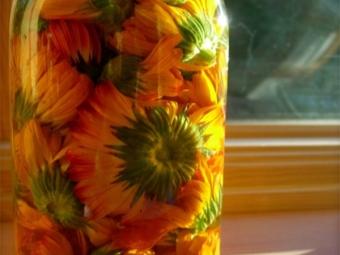 Настойка календулы из целых цветов