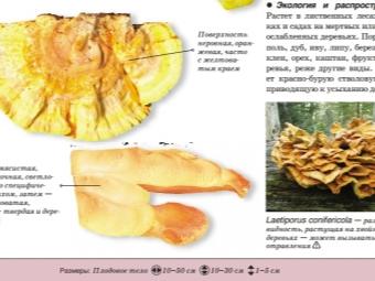 Серно-желтый трутовик