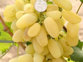 Как сварить компот из винограда