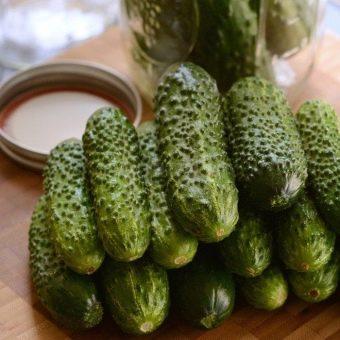 Характеристика и описание сорта огурца Погребок, его урожайность