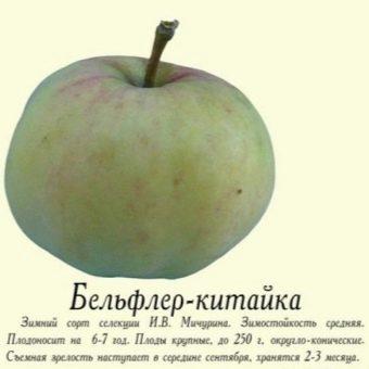 Сорт яблок Бельфлер китайка: описание, правила ухода, преимущества ... | 340x340