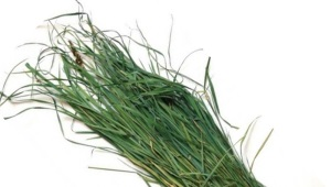 Зубровка трава