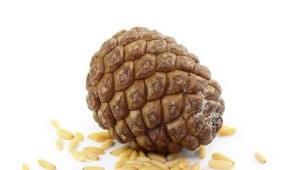 Орех пинии (итальянская сосна)
