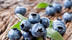 Удобрение для голубики: чем и как подкармливать растение?