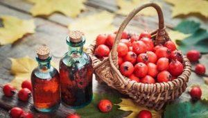 Всё о боярышнике: лечебная сила и сферы применения