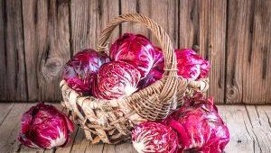 Краснокочанная капуста: польза и вред, советы по выращиванию и применению