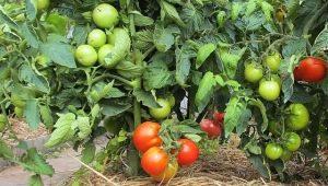 Чем и как мульчировать помидоры?