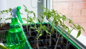 Чем полить рассаду помидоров для стимуляции роста?