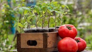 Как подготовить почву для помидоров?