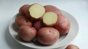 Картофель «Романо»: описание сорта и правила выращивания