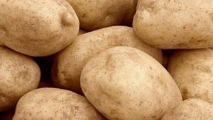 Картофель «Тулеевский»: описание сорта и особенности выращивания