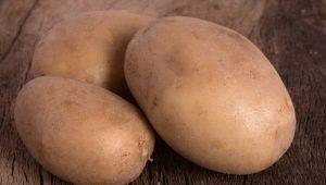 Картофель «Вектор»: характеристика, уход и выращивание