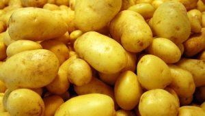 Картофель «Зекура»: описание сорта и тонкости выращивания
