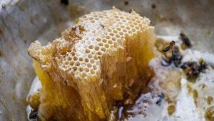 Мед диких пчел: что это такое и как выбрать?