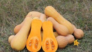 Мускатная тыква: разновидности, выращивание и использование