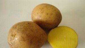 Описание и выращивание сорта картофеля «Гала»