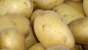 Описание сорта картофеля «Чайка»