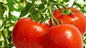 Особенности и правила выращивания томатов «Никола»