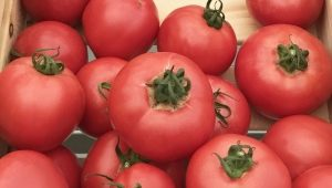 Особенности выращивания сорта томатов «Торбей»
