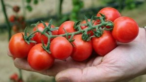 Помидоры «Черри»: сорта, польза, выращивание