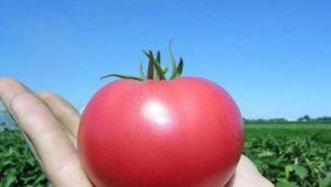 Помидоры «Пинк Парадайз»: особенности сорта и тонкости выращивания