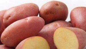 Технология выращивания картофеля «Ред Скарлет»