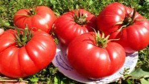 Томат «Бычье сердце»: отличительные черты и тонкости выращивания