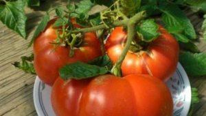 Томат «Хлебосольный»: описание сорта и особенности выращивания