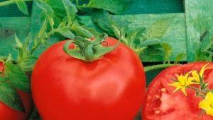 Томат «Катя»: характеристика сорта и правила выращивания