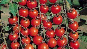 Томат «Оля F1»: характеристика и урожайность сорта