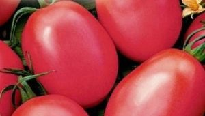 Томат «Розовый фламинго»: описание сорта, урожайность и выращивание