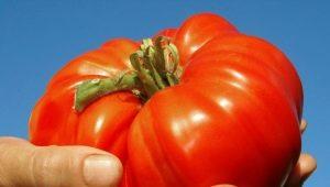 Томат «Розовый гигант»: описание сорта и процесс выращивания