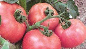 Томат «Розовый мед»: описание сорта и правила выращивания