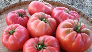 Томаты «Дикая роза»: описание и тонкости выращивания