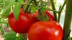 Томаты «Взрыв»: характеристики и выращивание
