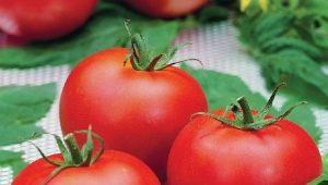 В чем особенности сорта томатов «Полфаст F1» и как его вырастить?