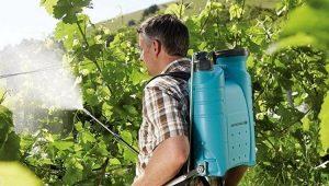 Чем обработать виноград?