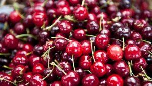 Чем отличается вишня от черешни?