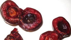 Червивая черешня: что делать и можно ли есть плоды?