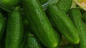Характеристика сорта огурцов «Трилоджи» и особенности выращивания