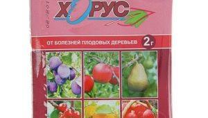 Инструкция по применению «Хоруса» для винограда