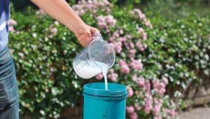 Как использовать молочную сыворотку для растений в саду?