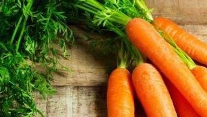 Как избавиться от болезней и вредителей моркови?