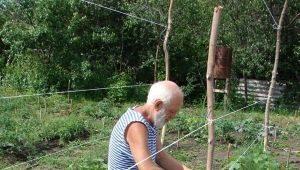 Как подвязать огурцы в открытом грунте?