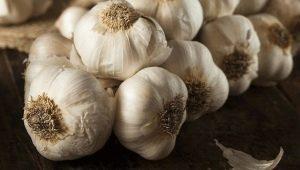 Как получить хороший урожай чеснока?