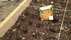 Как сажать морковь?